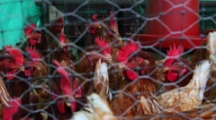ChickenCoop Stock Footage