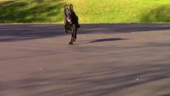 Dog Running Slow Motion - stock footage
