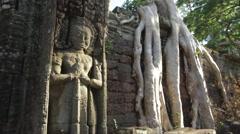 Tree Roots Decorative Stone Pillar Stock Footage