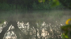Morning fog hovering over the river, tree reflections in water Stock Footage
