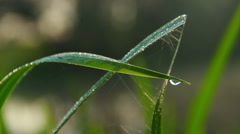 Water droplets on green grass, morning freshness, nature closeup Stock Footage
