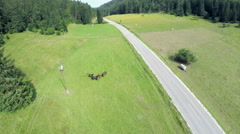 Wild horses in nature near countryroad Stock Footage