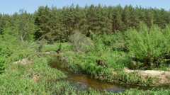 Small stream in a european forest, springtime - stock footage