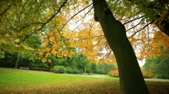 Beautiful autumn trees in park. Full HD with motorized slider. 1080p. Stock Footage
