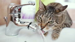 Funny cat drinking fresh water from faucet - front shot - stock footage