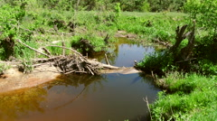 Beaver dam on a small forest creek Stock Footage