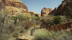Wide shot zooming in on canyon creek / Mill Canyon, Utah, United States Stock Footage