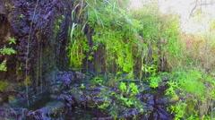 Stock Video Footage of Fresh spring streams, green leaves, nature awakening. Slow-mo