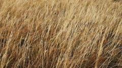 Autumn steppe Stock Footage
