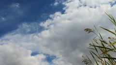 Autumn grass sky Stock Footage