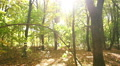 Walking in   sunny autumn   wood  . Steadicam shot HD Footage