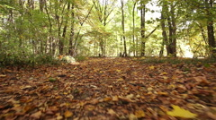 Sunny autumn  road in wood  . Steadicam shot like animal view. . Stock Footage