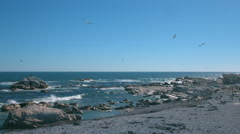 Rocky Coast, Western Cape, South Africa 1 Stock Footage