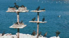 Birds at docking Yard, Western Cape, South Africa Stock Footage
