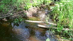 Small forest creek Stock Footage