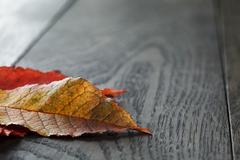 autumn cherry leaves on old oak table - stock photo