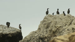 Cormorants sitting on big stone in the sea with red sunrise background Stock Footage