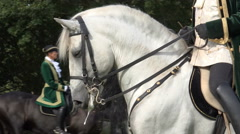 Classic cavalry white horse closeup Stock Footage