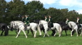 Classic cavalry big quadrille demonstration parade riding circle HD Footage