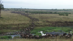 Migrating wildebeests cross a small stream towards big mara river Stock Footage
