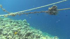 Ropes on reef dahab Stock Footage