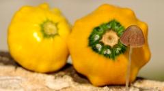 Wild mushroom and ornamental gourds Stock Footage