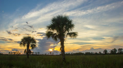 Florida Landscape Sunset Over Wetlands with Palm Trees Stock Footage