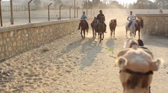 Camel riding in Cairo - stock footage
