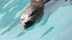 Harbour seal close up shot at interesting angle. Stock Footage