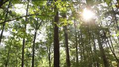 Sun Through The Trees - stock footage