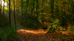 Morning's Sunlight Comes to Autumn Forest, Time Lapse Stock Footage