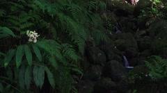 lush, dark jungle stream, inviting - stock footage