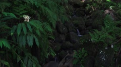 Lush, dark jungle stream, rain forest Stock Footage