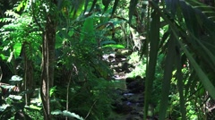 Lush, dark jungle stream, greenery Stock Footage