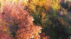 Flying Past A Tree With Fall Colour Leaves Stock Footage