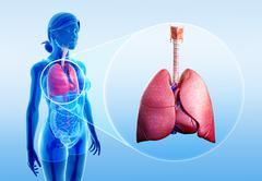 Human lungs anatomy Piirros