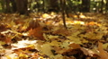 Beauty of  autumn  yellow wood. Dolly shot close up HD Footage