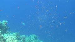 School of fish slowmo 03 dahab Stock Footage