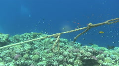 ropes on reef 02 dahab - stock footage