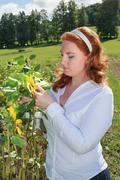 Obese redhead woman in a sunflower field. Stock Photos
