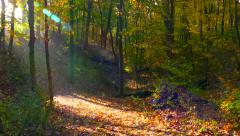 Morning's Sunlight Comes to Autumn Forest, Time Lapse - stock footage