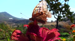 Butterfly , Flower, View, Background, Landscape Stock Footage