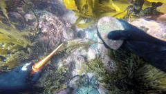Free diver collecting abalone (paua) underwater Stock Footage