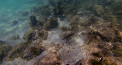 Reflections of the ocean from the ocean floor - stock footage
