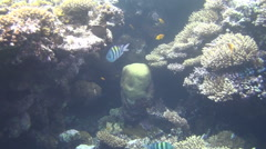 Colorful fishes on reef 43 dahab Stock Footage