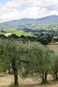 Summer landscape in umbria (italy) Stock Photos