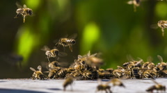 Bees Fighting With Aliens Stock Footage
