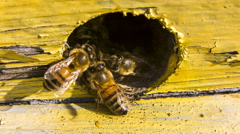 Bees Extrude Alien Our Of Hive Stock Footage