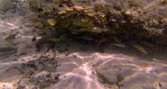 Fish hiding under rocks Stock Footage