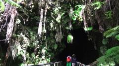 Lush, dark jungle lava tube Arkistovideo